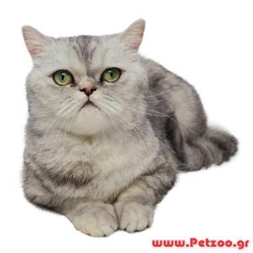 ba712ef013cb επιστροφή γάτας στο παλιό της σπίτι