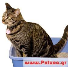 a1bdc530ebdf δυσκολία γάτας κατά την ούρηση
