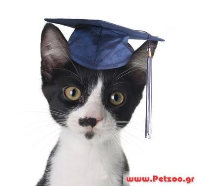 68c05c6df5a4 Συμπεριφορά   Εκπαίδευση - ONLINE