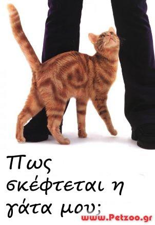 fb92eef467bd Ρώτα τον Κτηνίατρο - ONLINE