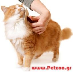 dec62fb25985 Περιποίηση γάτας με κοντή τρίχα