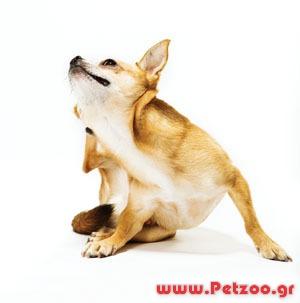 Αλλεργία στο σκύλο