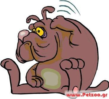 αλλεργία σκύλου