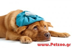 αλλεργίες στο σκύλο