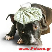 Αρρωστος σκύλος