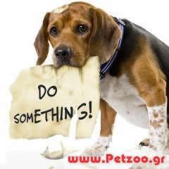 Ασθένειες σκύλος