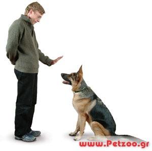 Βασική εκπαίδευση σκύλου