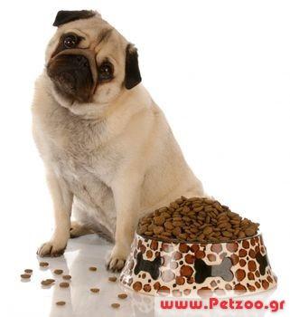 δίαιτα γέρικου σκύλου