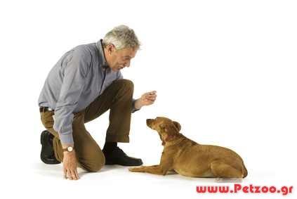εκπαίδευση βασική υπακοή σκύλου