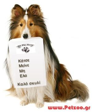 εκπαιδευση του σκύλου μου