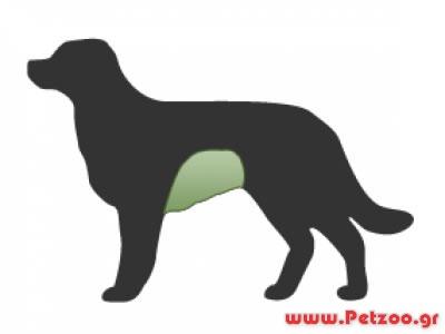 εντερίτιδα σκύλου
