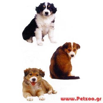 επιλογή σκύλου