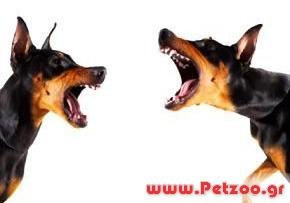 επιθεση σκύλου