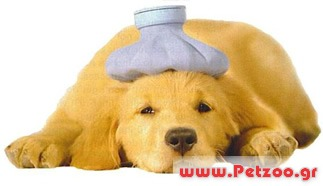 γαστρεντεριτιδα σκύλου