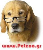 γερασμένος σκύλος