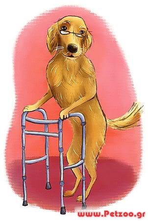 Γέρικος σκύλος