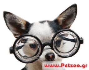 γλαυκωμα στο σκύλο