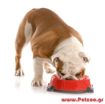Υγιεινή διατροφή σκύλου