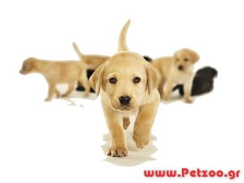 Πρόληψη ασθενειών στο σκύλο