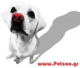 υγρή μύτη σκύλου
