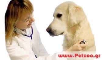 καρκινος στο σκύλο