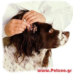καθαρισμός στα αυτιά του σκύλου
