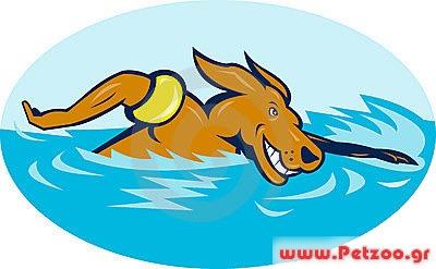 σκύλος και κολύμπι