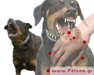 Λύσσα στο σκύλο