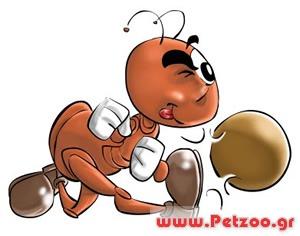 μυρμηγκιές στο σκύλο