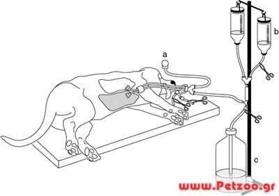 νάρκωση του σκύλου