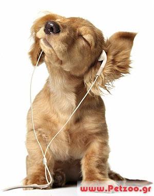 όραση και ακοή του σκύλου