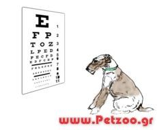 οραση στο σκύλο