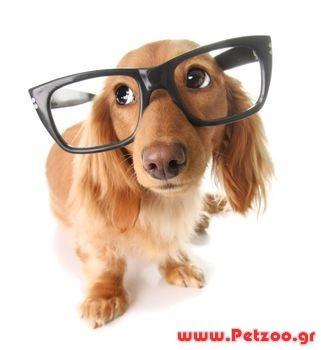 οραση σκύλου