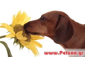 Οσφρηση του σκύλου
