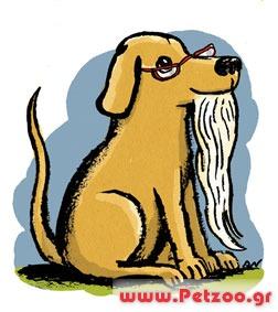 Πόσα χρόνια ζεί ο σκύλος