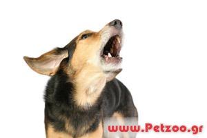 Προβλήμα με το γάυγισμα του σκύλου