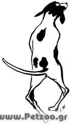 ραχιτισμός στο σκύλο