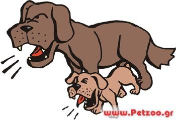 σκύλος γαυγιζει