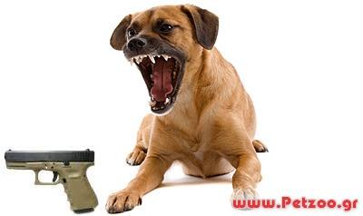 σκύλος φυλάει αντικείμενα