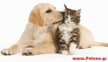 συμβίωση σκύλου και γάτας