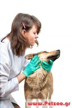 ψώρα του σκύλου