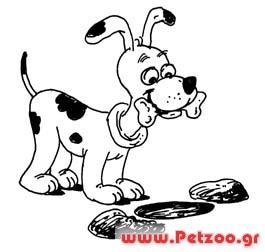 σκύλος θαβει κόκκαλα