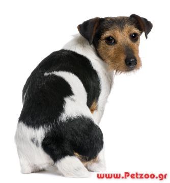 σκύλος τρίψιμο με οπίσθια