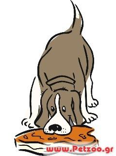 σκυλος τρωει αψητο κρέας