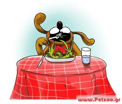 σκύλος τρώει χόρτα