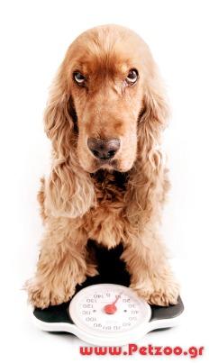 στειρωμένος σκύλος