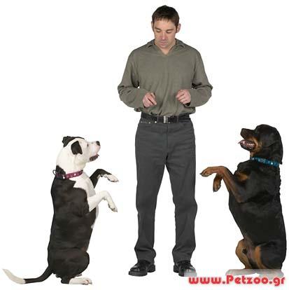 θετική εκπαίδευση σκύλου
