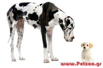 Τι σκύλο να διαλέξω