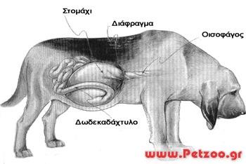 Τυμπανισμός σκύλου