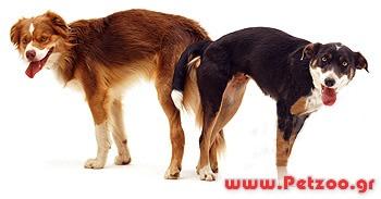 ζευγάρωμα σκύλας